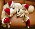 [平安夜]祝圣诞节快乐!