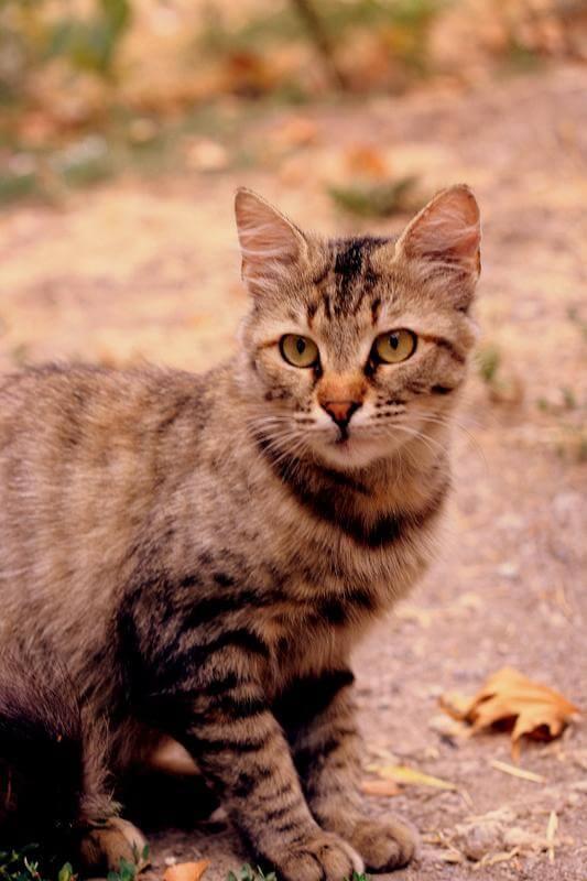 naughty_kitten-d48tduq